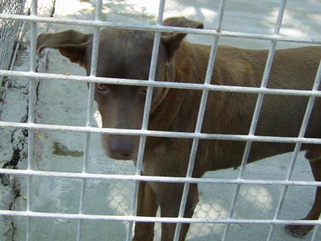 Refuge salon de provence bis 200 chiens sos for Sos dentiste salon de provence