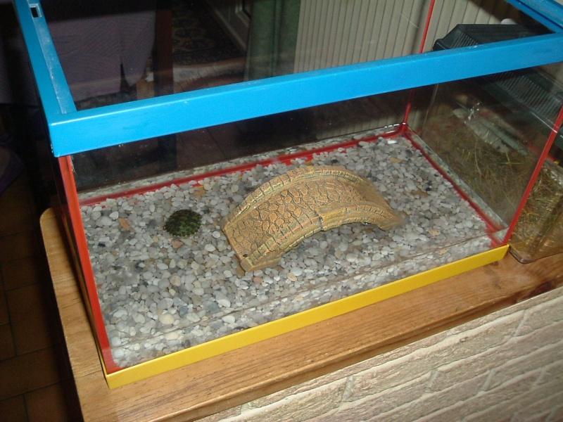 Tortue d 39 eau - Aquarium complet pour tortue d eau ...