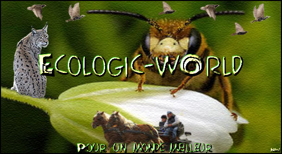 ¤ Ecologic & ZanimOs  World... ¤