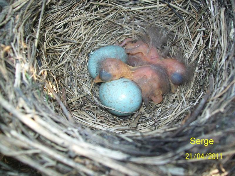 Oiseaux de nos jardins france les oiseaux de nos jardins for Oiseaux de nos jardins