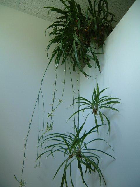 Liste des plantes toxiques et non toxiques for Liste plantes