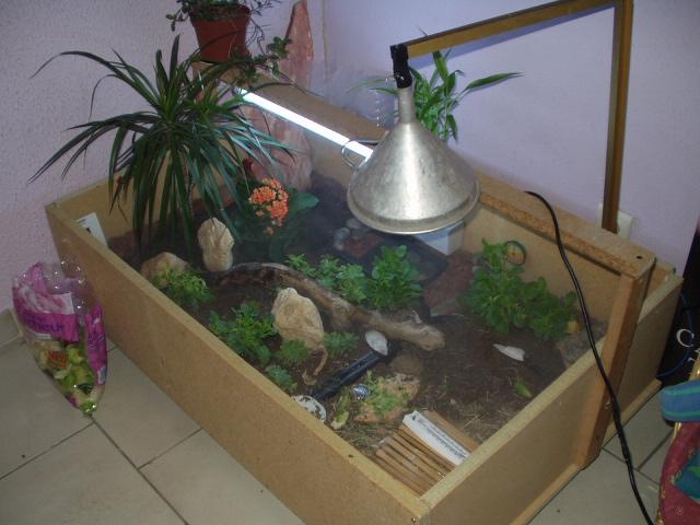 soucis de sant pour une tortue venue du maghreb. Black Bedroom Furniture Sets. Home Design Ideas