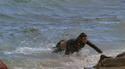 Oops butt slip ! - in Malibu [19.08.2007] Foto 262 (К сожалению прикладом скольжения! - в Малибу [19.08.2007] Фото 262)