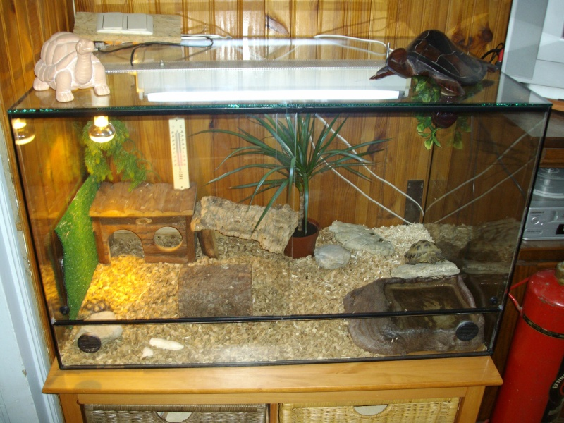 Terrarium for Aquarium original pas cher