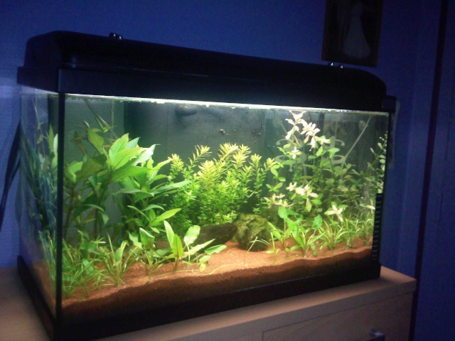 Petit Aquarium Filtre Decor Ef Bf Bd