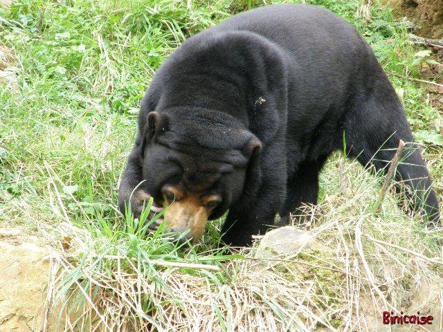 Parc animalier de Trégomeur 2/3 dans Animaux p8241111