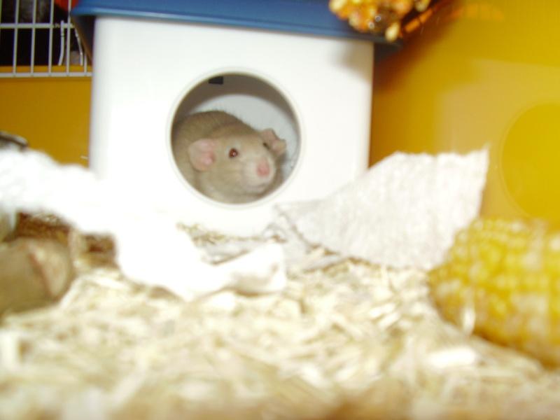 rats_111.jpg