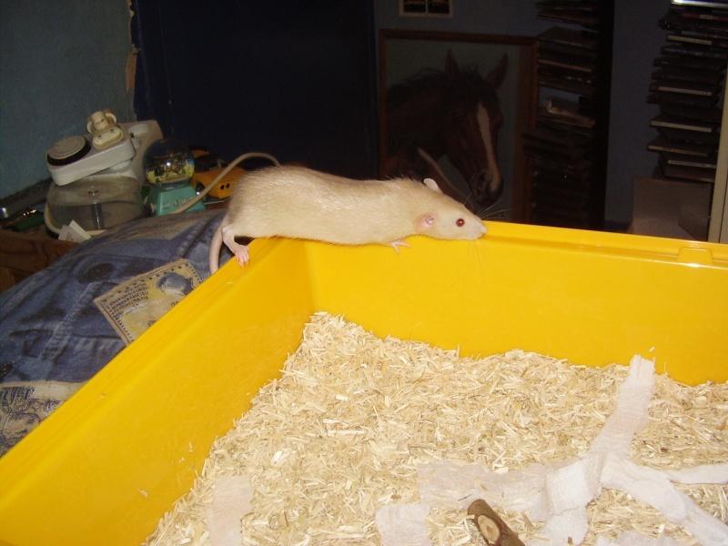 rats_112.jpg