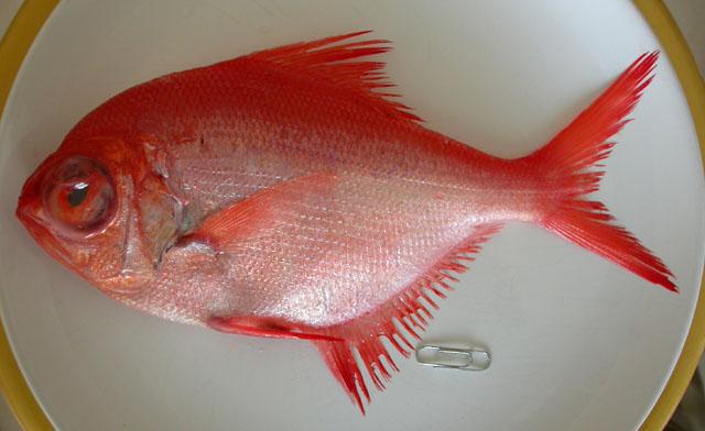 Poisson de mer en grand danger - Grand poisson de mer ...