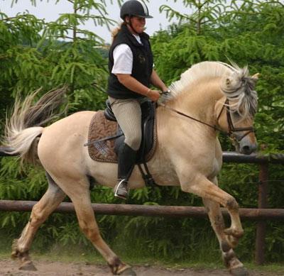 Choisir son bridon - Blog sellerie Cheval de Trfle