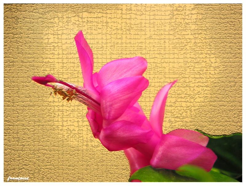 fleurc10.jpg