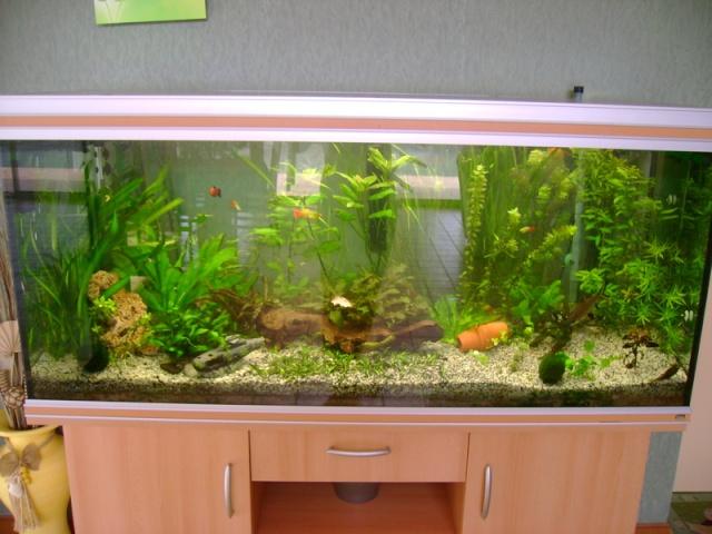 Vendu aquarium rena 450l tr s bon tat et complet for Aquarium rena