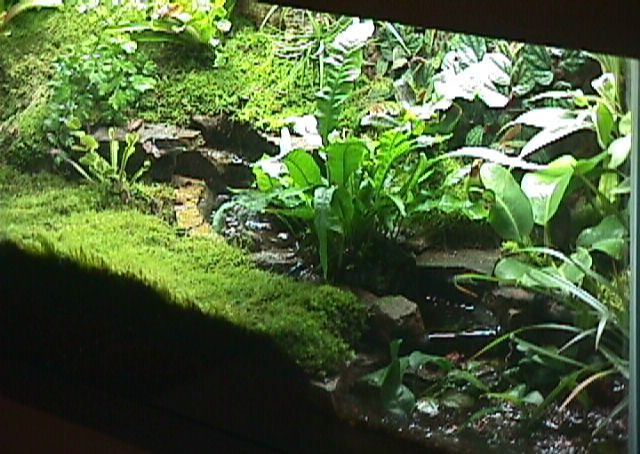 cascade terrarium
