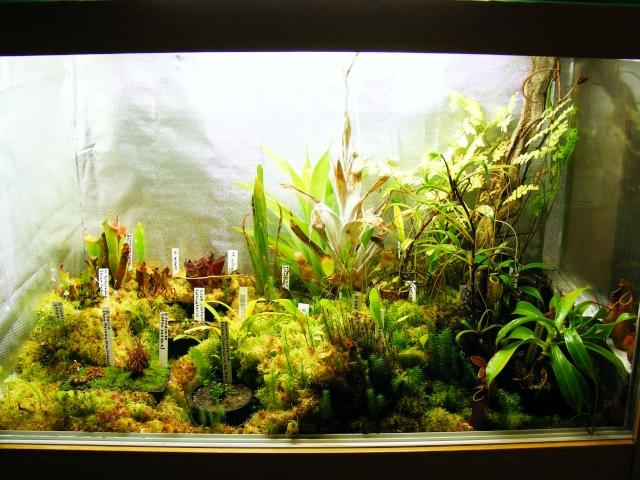 le forum carnivore afficher le sujet mon terrarium. Black Bedroom Furniture Sets. Home Design Ideas