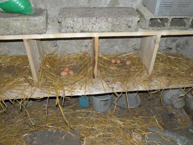 Perchoir pour poules trouvez le meilleur prix sur voir avant d 39 acheter - Ou acheter des poules pondeuses ...