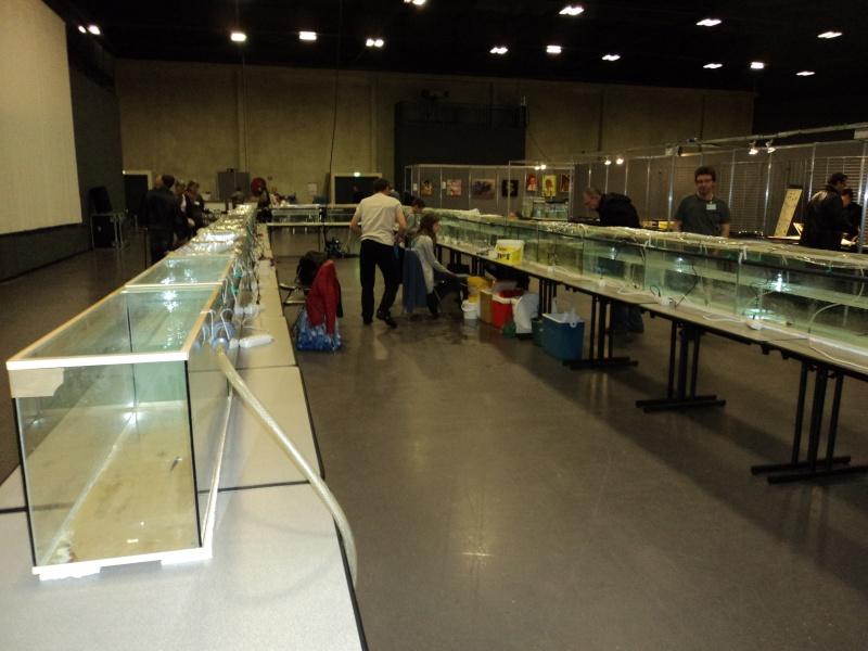 Salon agora le 17 avril 2011 grande synthe dunkerque for Salon dunkerque