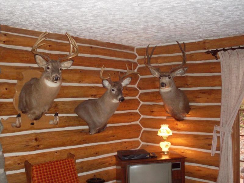 photo mon campe de chasse le suisse. Black Bedroom Furniture Sets. Home Design Ideas