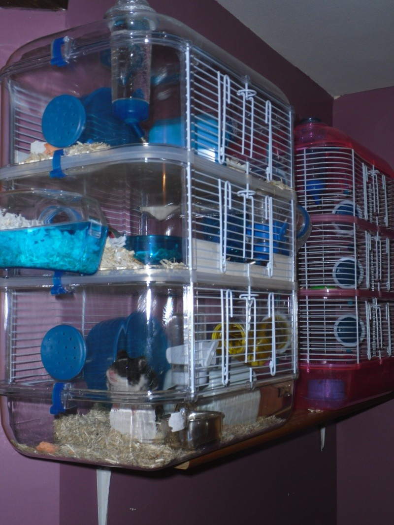 cage rody. Black Bedroom Furniture Sets. Home Design Ideas