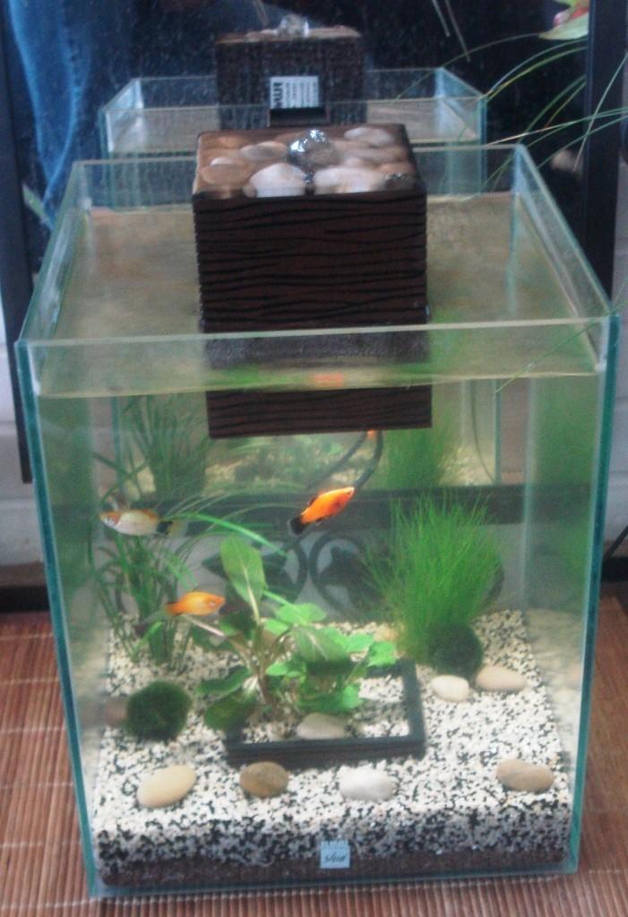 nano aquarium fluval shui 19 litres 69. Black Bedroom Furniture Sets. Home Design Ideas